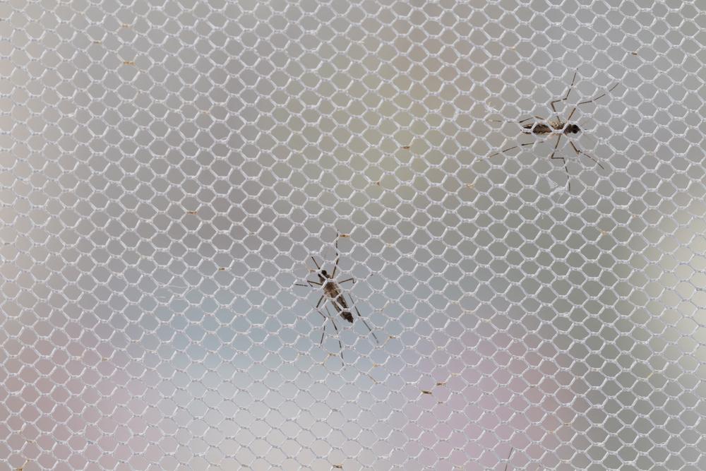 Szúnyoghálókkal kapcsolatban egyedi igényei vannak? – Vásároljon szúnyogháló szetteket!